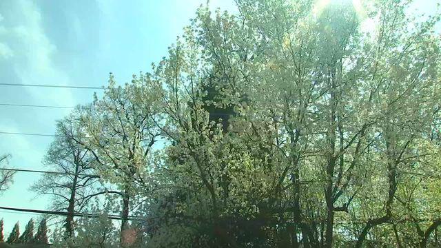 Pollen season in Georgia starting earlier, lasting longer