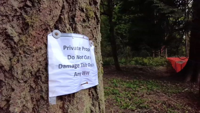 'This will not grow back in my lifetime': Olympia homeowner puts himself between old tree and develo