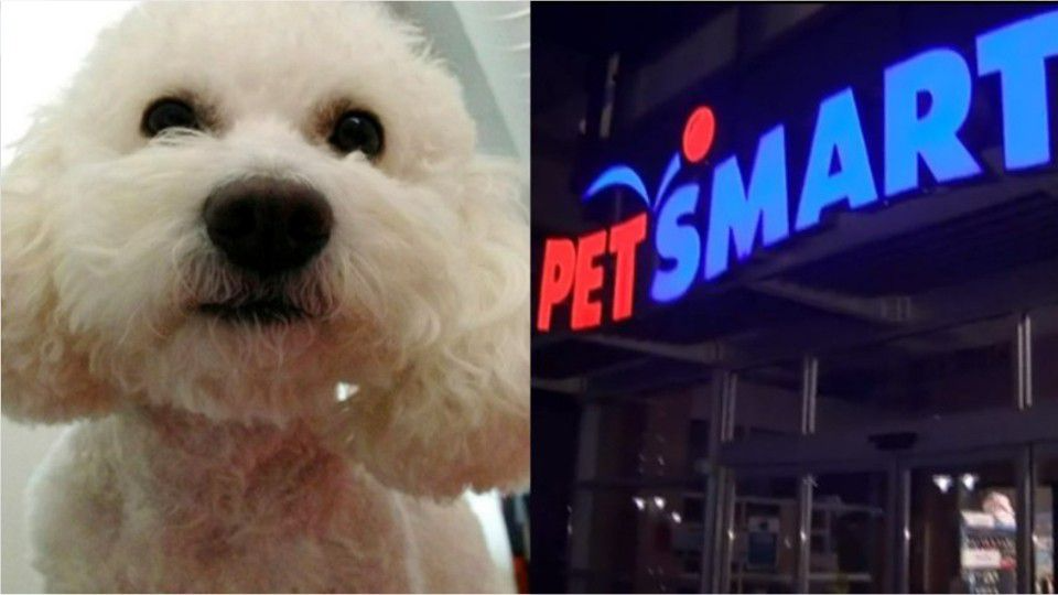 Toy poodle dies at PetSmart during grooming appointment, 4 employees face charges