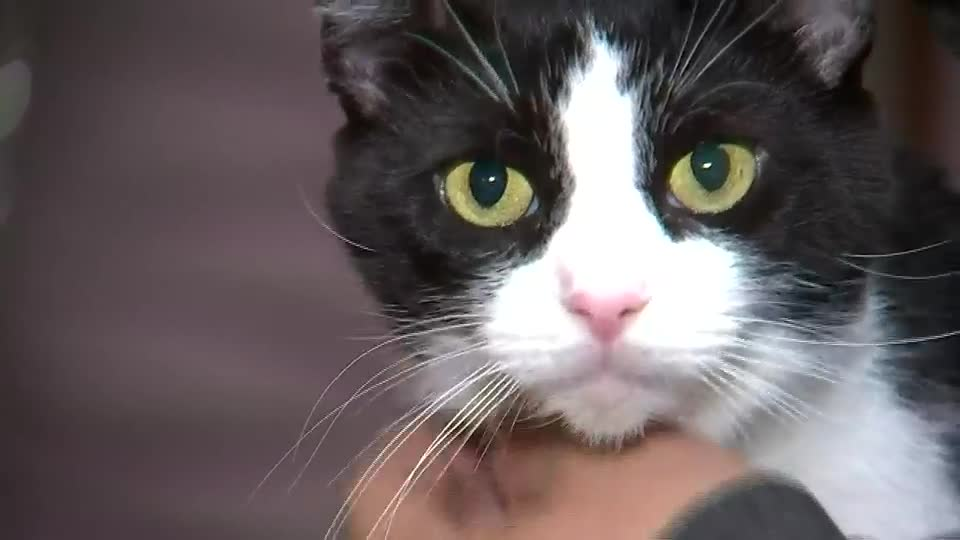 Local family's cat nearly dies from reaction to flea and tick ointment