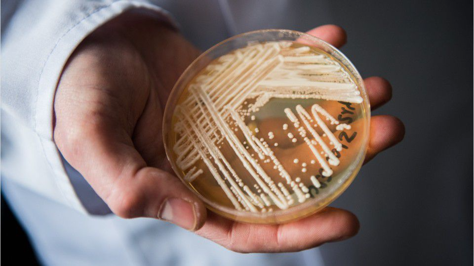 Health Officials Warn of Fungus 'Superbug' Outbreaks in Dallas and D.C. That Seem Resistant to Treatment