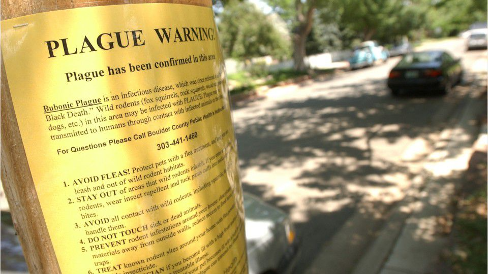 Bubonic plague kills 10-year-old Colorado girl