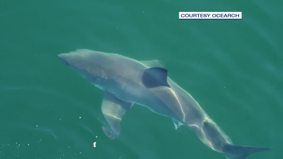 Massive shark caught on camera by Fall River fisherman
