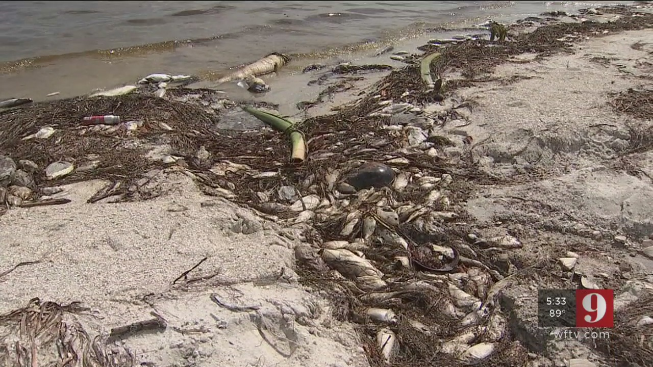 Florida's red tide problem: Not much we can do, at least in the short-term